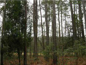 $70,000 Summerville, Build your dream home on this private lot in